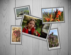 Eastern Cape Wildflowers. A spectacular sight to see during Spring and Summer.